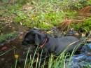 Amos cools off