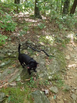 hurricane-matthew-appalachian-trail-section-hike-10-08-2016-10-14-01