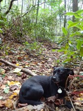 hurricane-matthew-appalachian-trail-section-hike-10-08-2016-14-15-29