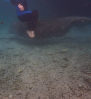 Manatee Dive and Tour - 02.18.2017 - 09.09.56