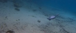 Manatee Dive and Tour - 02.18.2017 - 09.15.31