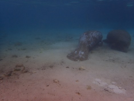 Manatee Dive and Tour - 02.18.2017 - 09.17.10