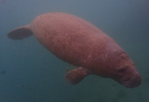 Manatee Dive and Tour - 02.18.2017 - 10.33.21