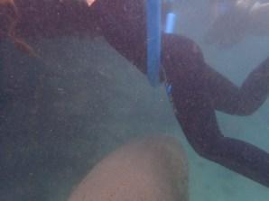 On it's way back, it swam right beneath Nicole.