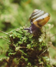 20180613 - Snails, Moss and Planarians 004