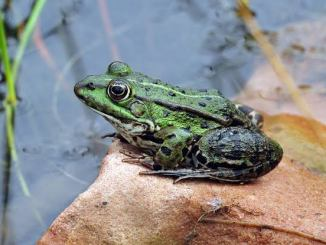 A Frog's Home Is Called A Pond