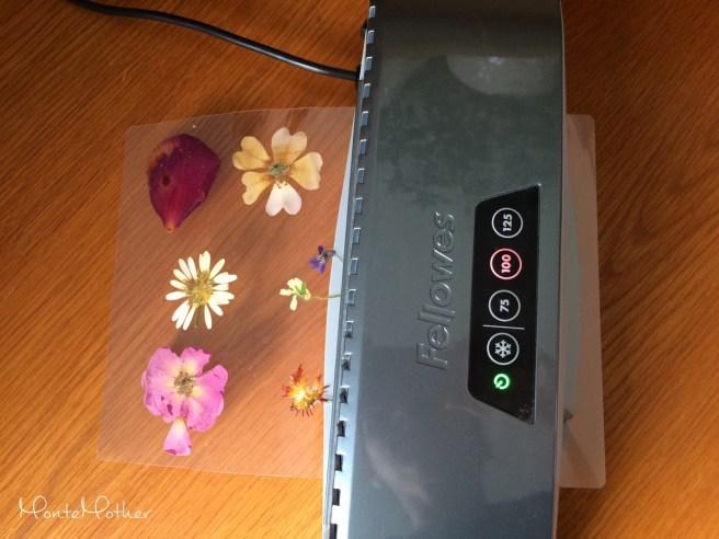 laminovanie vylisovanych kvetov