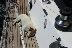 Louis snoozing on deck on Monty B