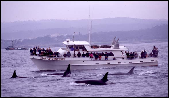 monterey bay whale watch, whale watching