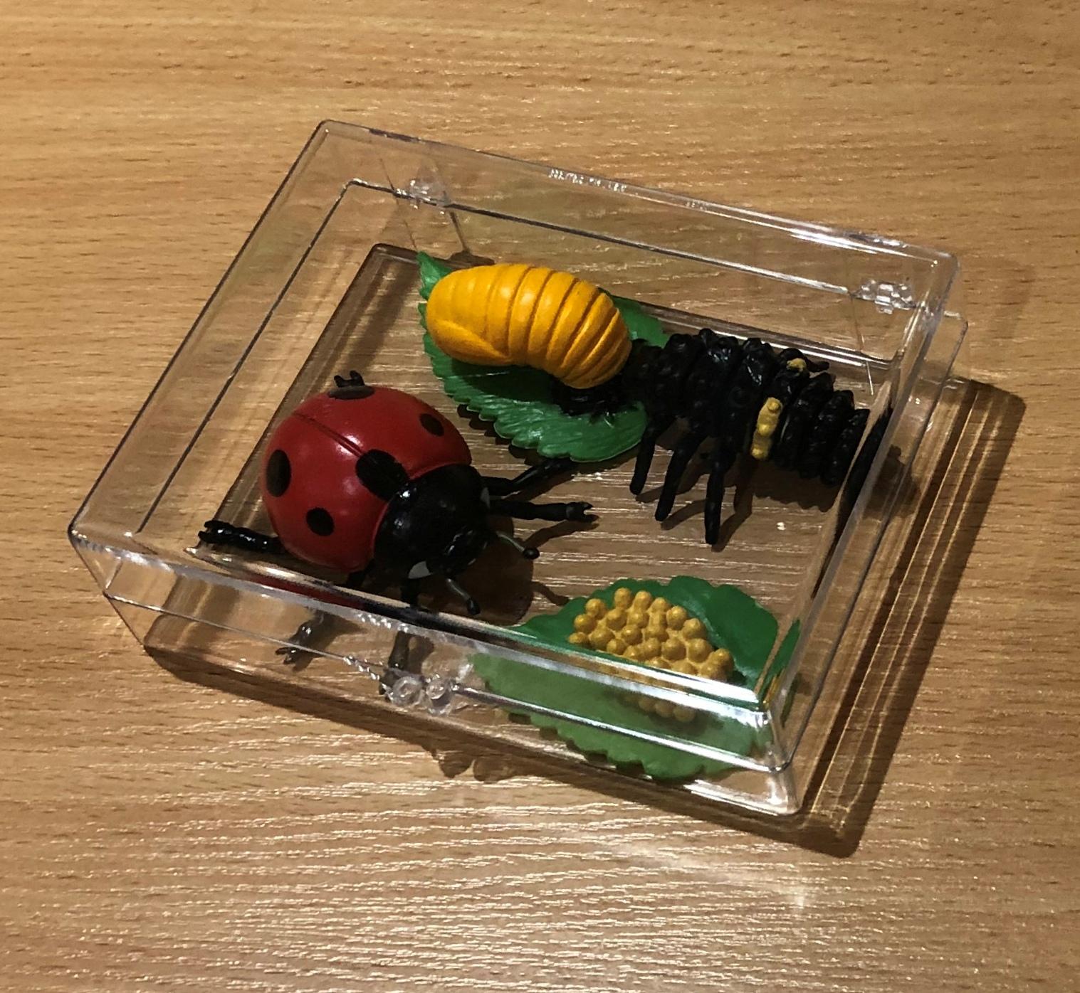 Ladybug Life Cycle Activity Set