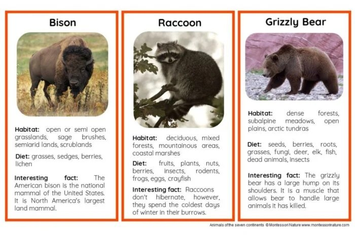 45 Animals Of North America