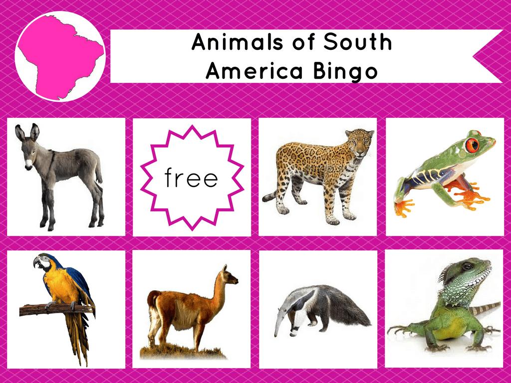 Montessori Inspired Animals Of The Continents Bingo Printable