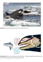 Orca photo fact cards
