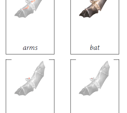 Parts of a Bat cards