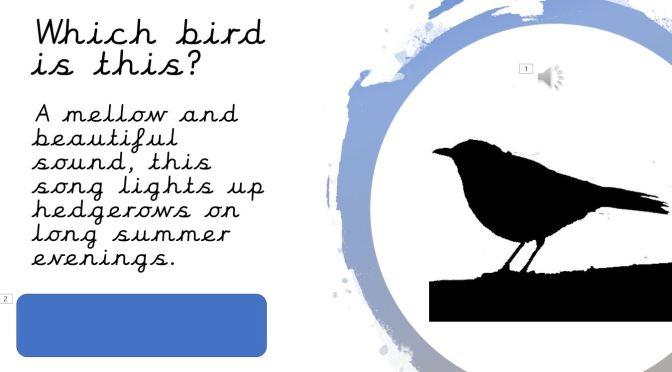 Bird song quiz