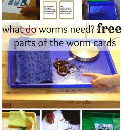 fundamental needs of worms a montessori science work montessori works [ 1500 x 2100 Pixel ]