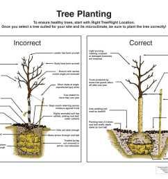 tree planting diagram [ 1584 x 1224 Pixel ]