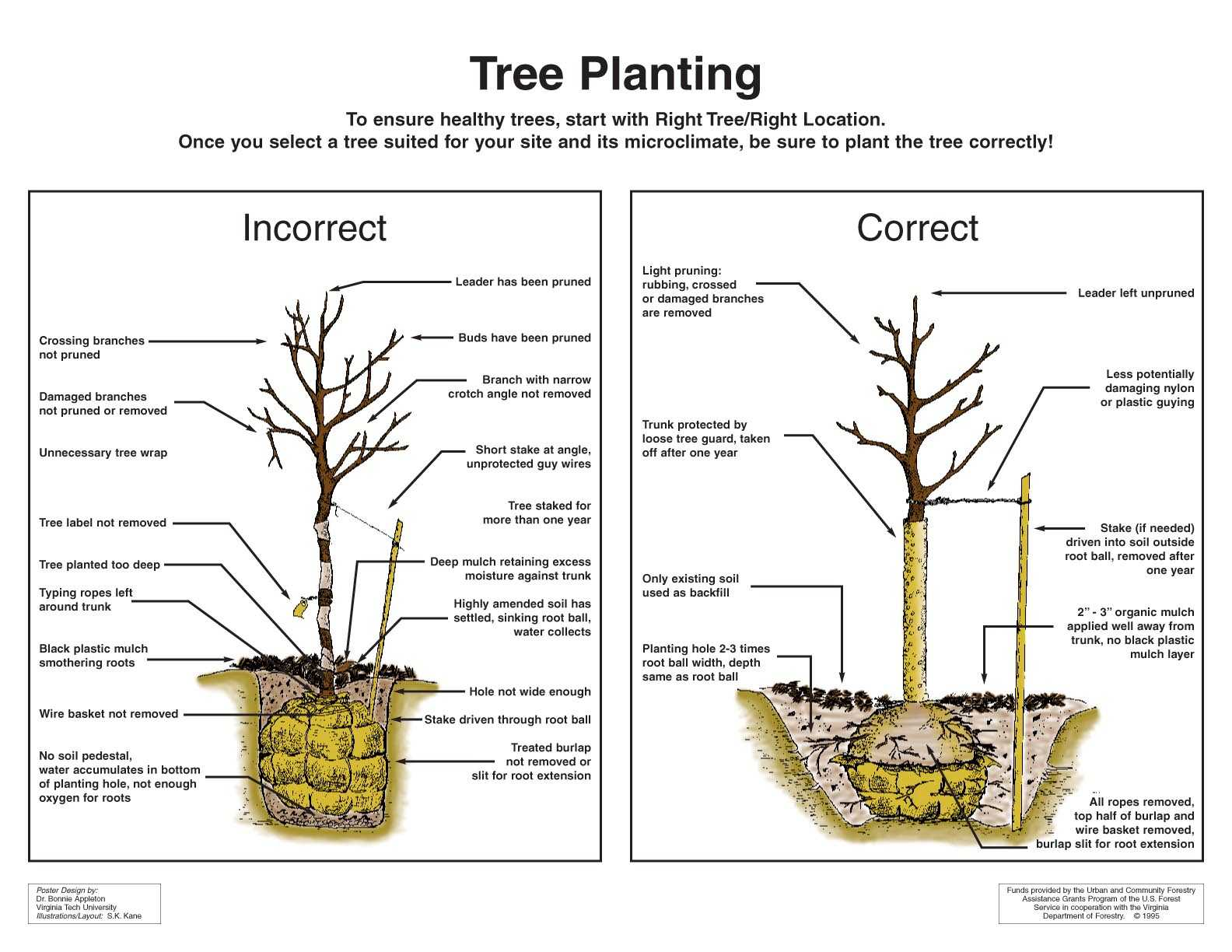 hight resolution of tree planting diagram