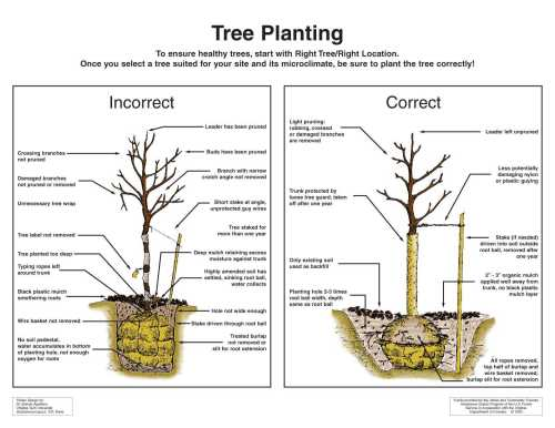 small resolution of tree planting diagram
