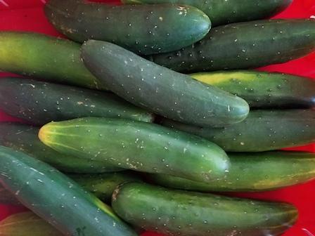 Fresh Vegetables at Mood39s Farm Market