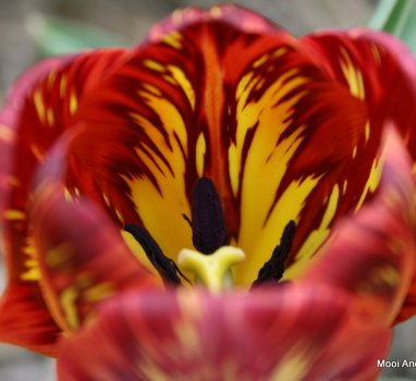 BinnenkortWorkshop: Tulpen arrangement