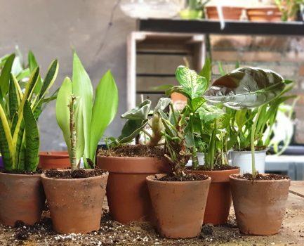 Adoptie en donatie planten asiel aangepast