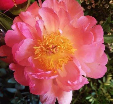 Laatste kans… bestel snel bloemen voor je moeder!