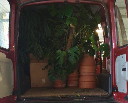 Een auto vol asielplanten