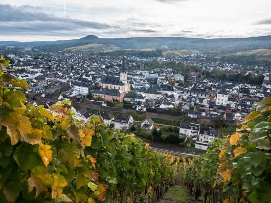 Wijngaard boven Ahrweiler