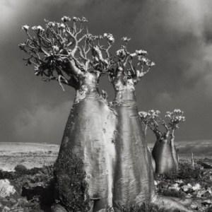 beth-moon-ancient-trees