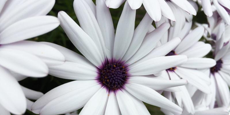 asylum poem flower