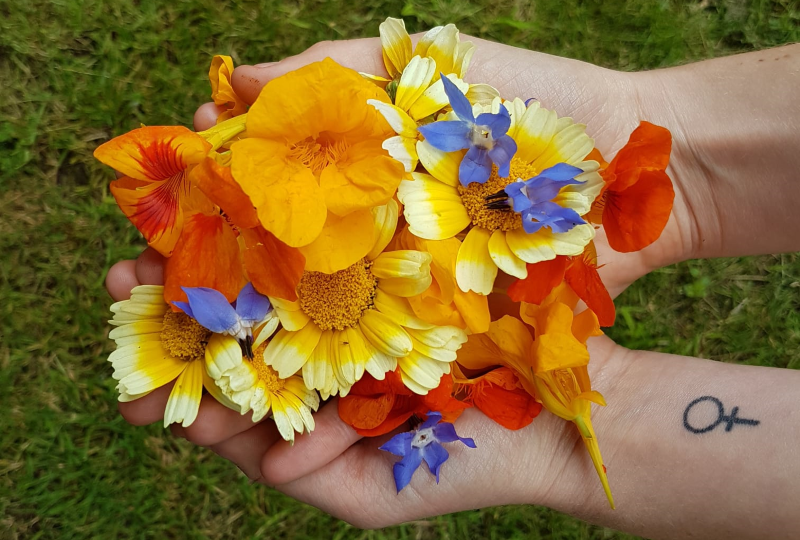 foraging edible flowers greg hardwood