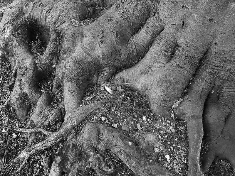 suburban horror tree roots