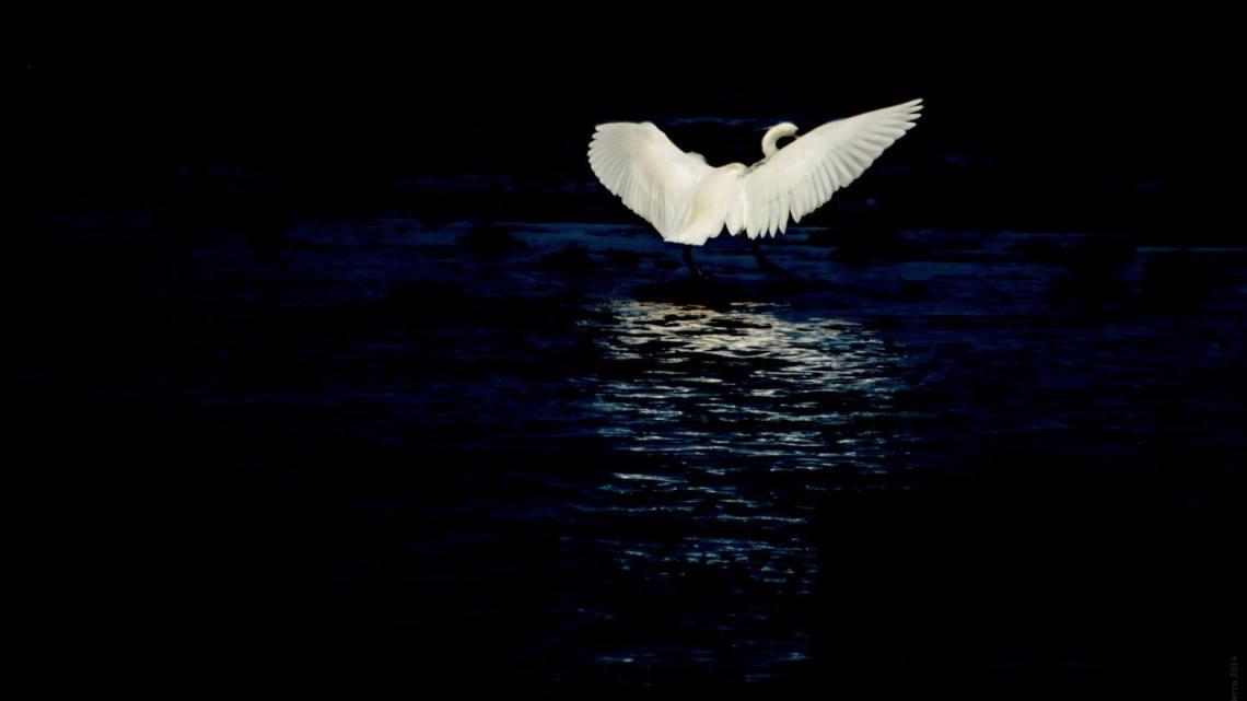 """""""Eclipse"""". Post de poesía coral de Artistas-Creadores 2"""