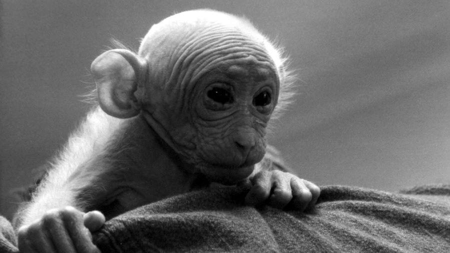 Llora Britches: la canción que llama a la escucha por el fin del confinamiento animal 6
