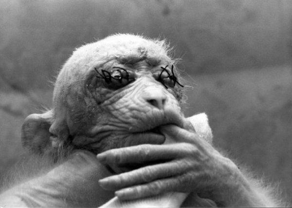 Llora Britches: la canción que llama a la escucha por el fin del confinamiento animal 7