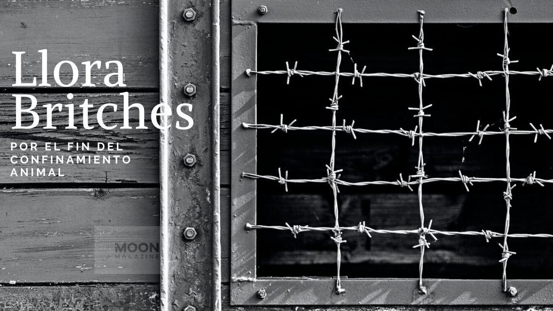Llora Britches: la canción que llama a la escucha por el fin del confinamiento animal