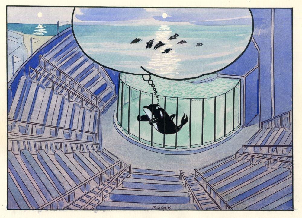 Orca Kshamenk. Viñeta de Pablo Catalán