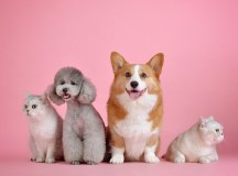 How to Choose the Perfect Pet for Your Family