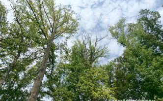 Moore Approved Trees Sky
