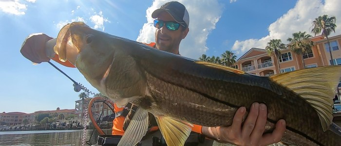 Biggest Snook Ever May 2019.00_05_46_25.Still001
