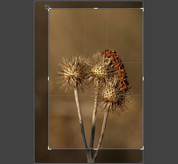 Adobe Lightroom Tip Croptool Croppen Bijsnijden