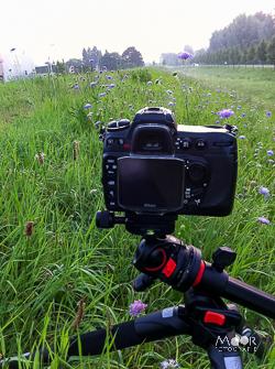 Beginnen met macrofotografie