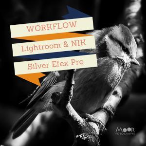 Fotobewerking Pimpelmees naar Zwart-Wit in Lightroom en NIK Silver Efex Pro