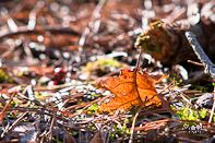 Herfst Herfstfotografie Details Tip