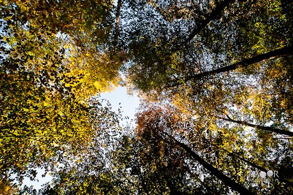Herfst Herfstpracht Vastleggen