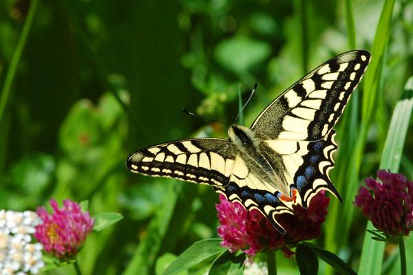 Macrofotografie Oostenrijk Vlinder