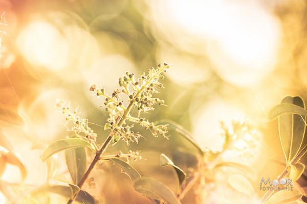 Woordloze Woensdag licht zomer bladeren