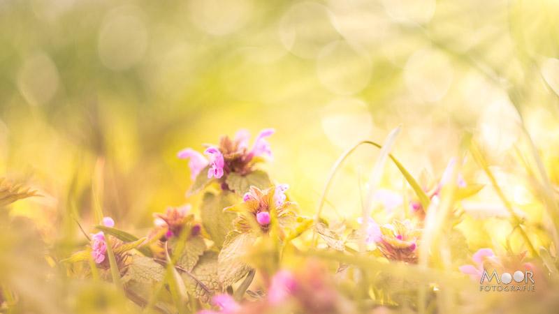 Woordloze Woensdag Licht en Voorjaar