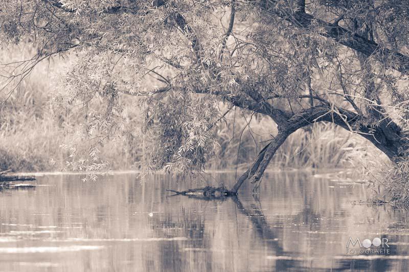 Woordloze Woensdag Biesbosch Waterland